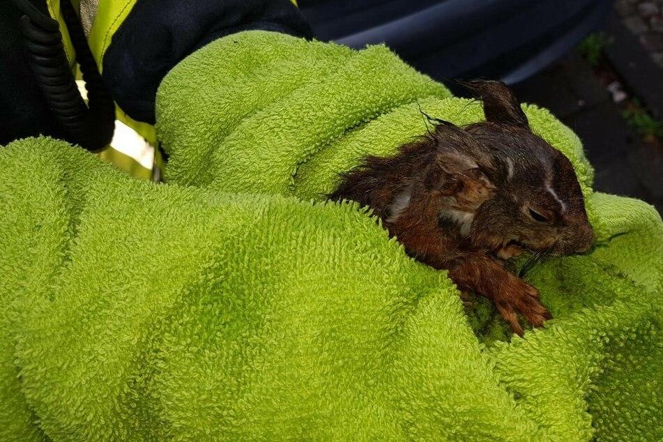 Die Eichhörnchen-Mutter konnte sich aus eigener Kraft befreien, ihr Junges steckte jedoch weiter im Rohr fest.
