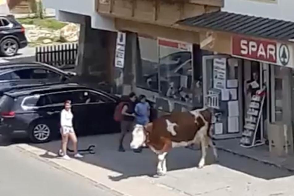 Schräges Video zeigt: Hier geht eine Kuh im Supermarkt einkaufen
