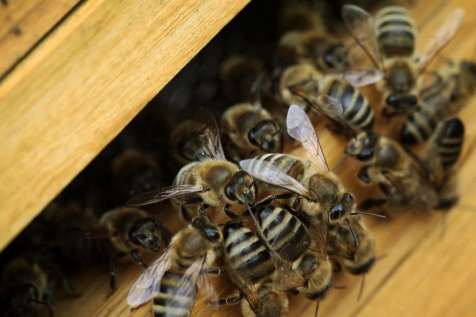 In der Kälte hatten die schutzlosen Bienen keine Chance zu überleben (Archivbild).