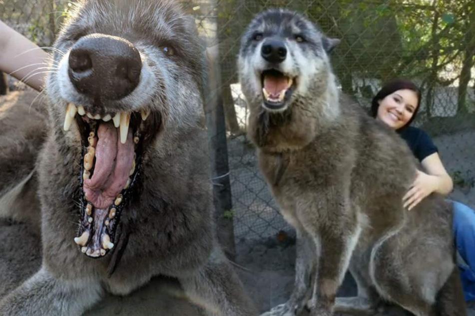 Herrchen geschockt: Sein Riesen-Vierbeiner ist gar kein Hund!