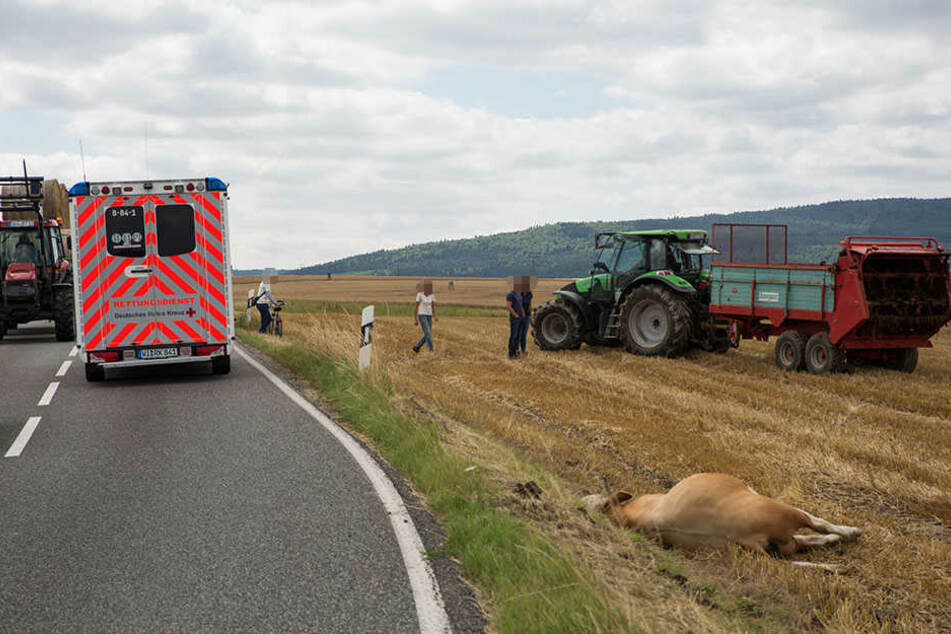 Angriff in Idstein: Bulle nimmt Polizist auf Hörner: Kollege erschießt das Tier