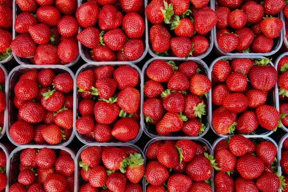 Erdbeeren belegen Platz 5 der beliebtesten Obstsorten der Deutschen