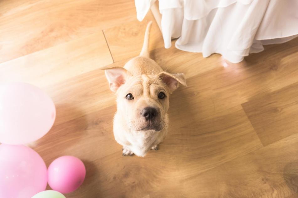 Hunde signalisieren Dir durch ihr Verhalten, wenn sie sich lösen müssen.