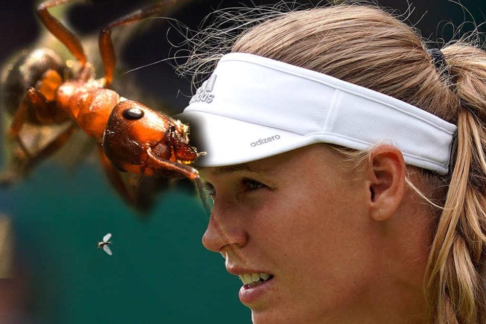 Tennis-Ass genervt von Ungeziefer