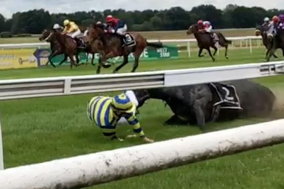 Das Pferd brach sich das Bein und stürzte, der Jockey wurde auf den Boden gewirbelt und überstand den Sturz unbeschadet. Das Pferd musste eingeschläfert werden.