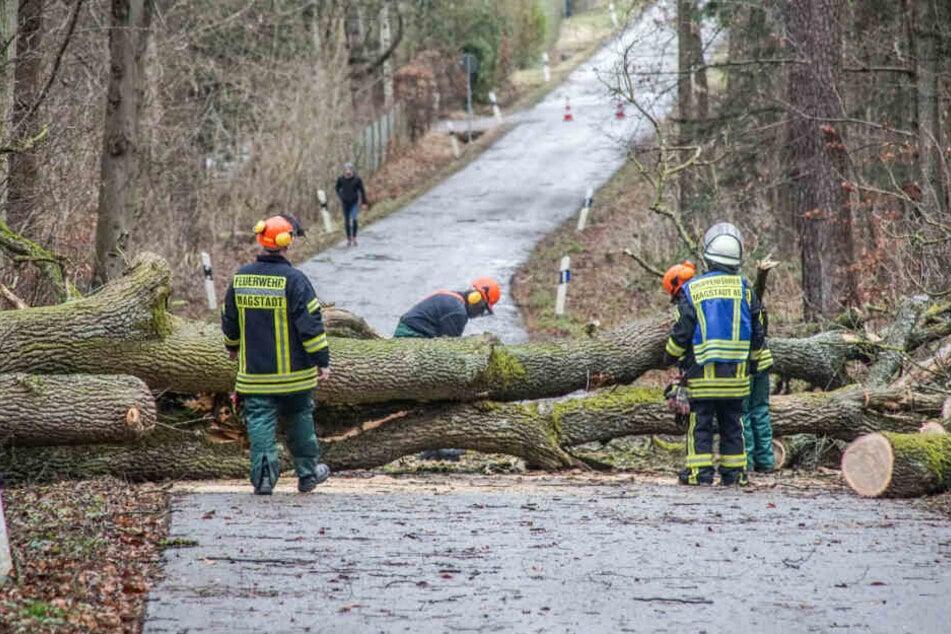 17 Menschen verletzt: So wütete Orkan-Tief Sabine in Baden-Württemberg