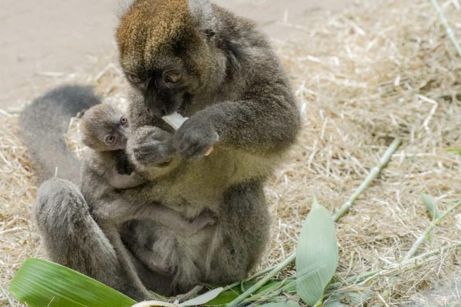 Das kleine Tierbaby ist noch sehr anhänglich.
