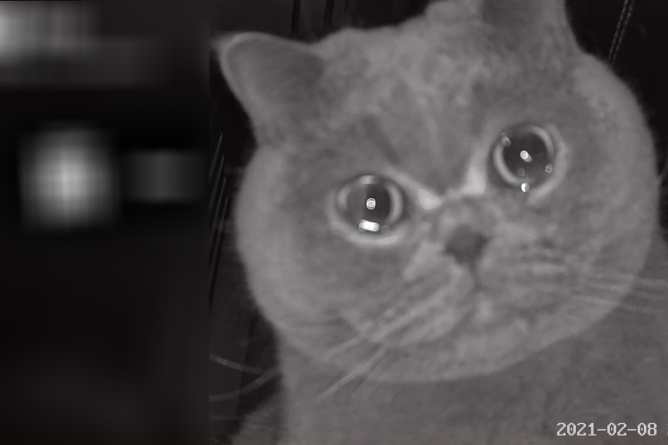 This crying kitty breaks his owner's – and the internet's –heart