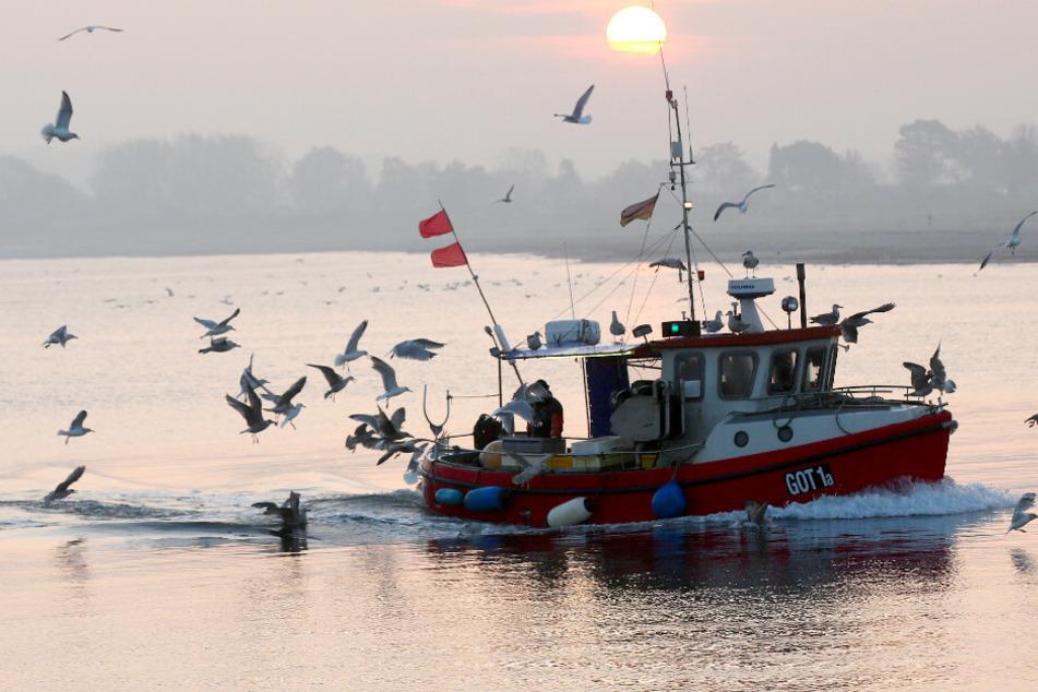 """""""Besorgniserregendes Tempo"""": Nord- und Ostsee deutlich wärmer geworden"""