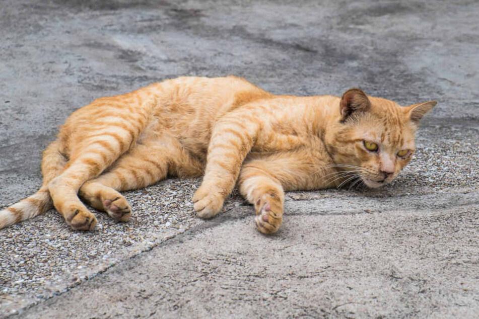 In Freiberg ist eine Katze beschossen worden (Symbolbild).