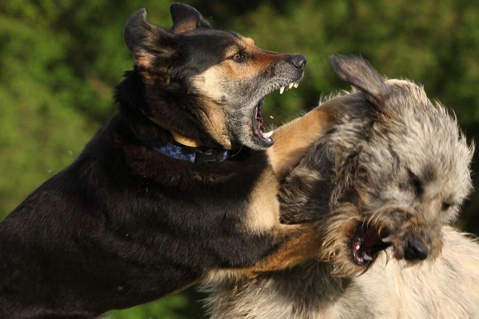 Sie fraßen ihn bereits auf! Hunde zerfleischen Mann auf Straße zu Tode