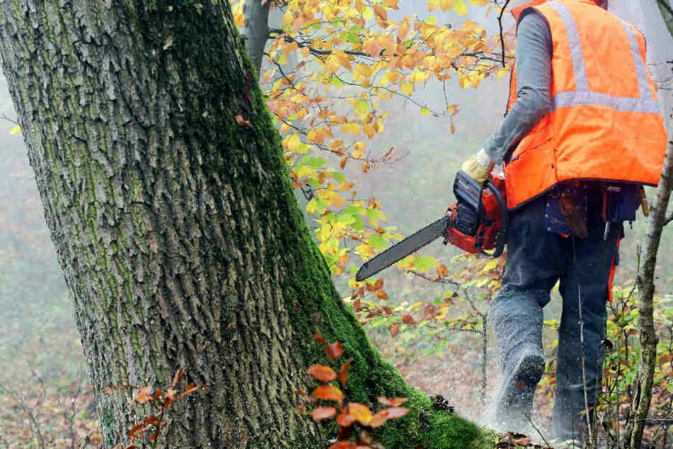 Das Unglück ereignete sich bei Baumfällarbeiten (Symbolbild).