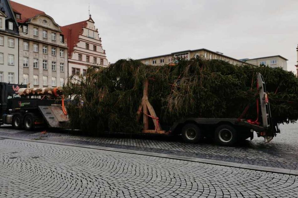 Der Weihnachtsbaum für den Leipziger Weihnachtsmarkt wurde am heutigen Donnerstaf aufgebaut.