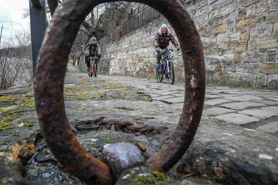 Im Frühjahr soll der holprige Körnerweg am Elberadweg neuen Belag erhalten.