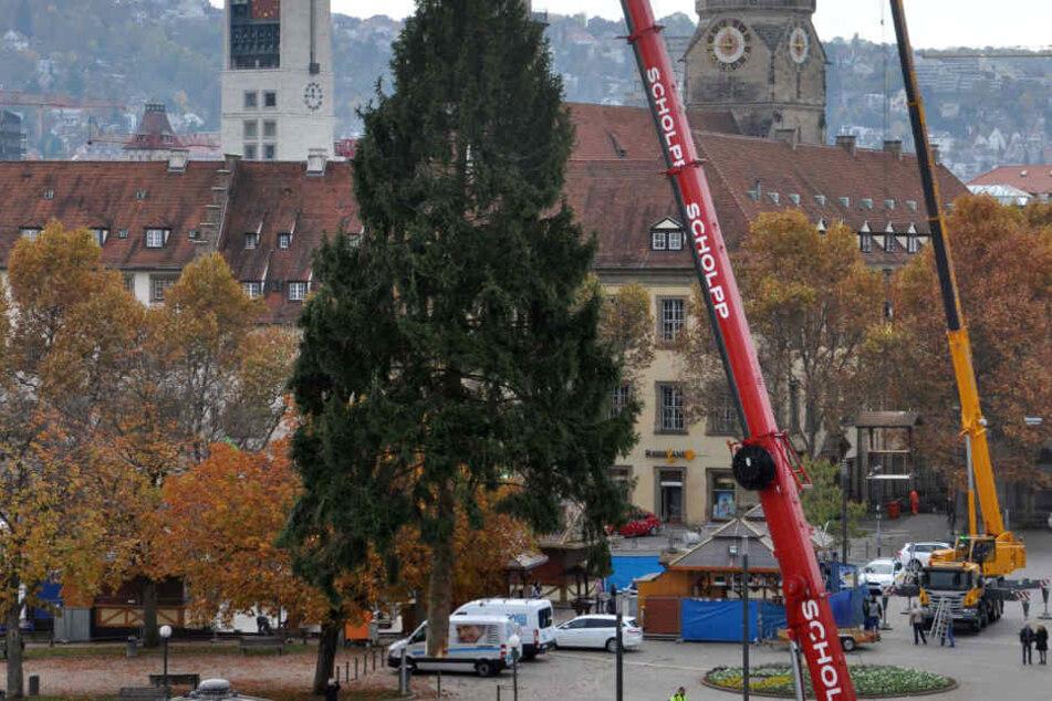 Es ist ein Anblick für sich, wenn die Riesentanne über Stuttgarts Schloßplatz schwebt. Am Freitag kommt der Weihnachtsbaum für 2017 an.