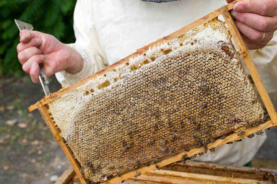In Hiddesen haben unbekannte Täter den Bienenstock auf einer Plantage gestohlen (Symbolbild).
