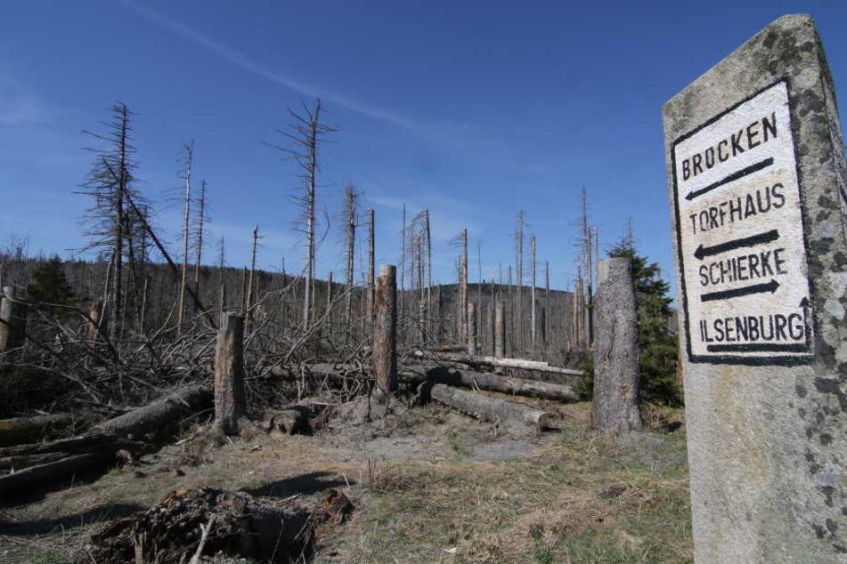 Die Waldbrandgefahr in Sachsen, Sachsen-Anhalt und Thüringen soll zum Wochenende hin sinken, allerdings weiter hoch bleiben.