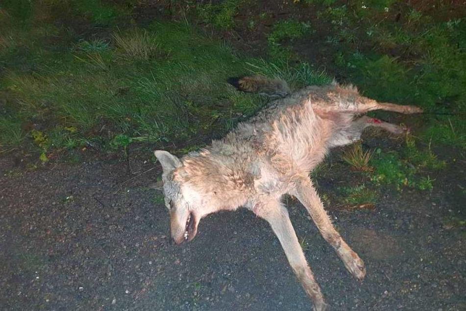 Das tote Tier wurde auf der A9 in Richtung Berlin gefunden.
