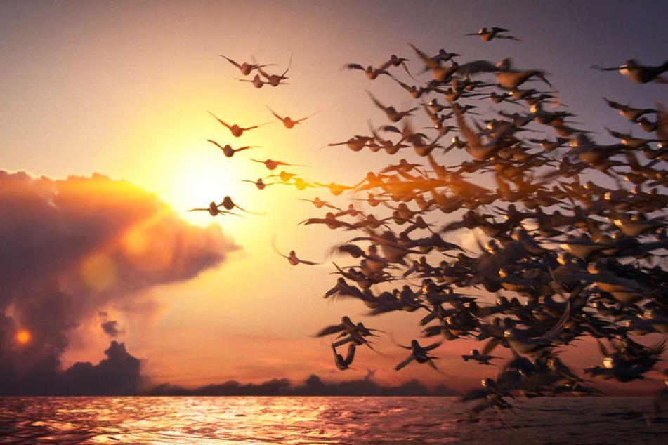 Ein schönes Standbild. Leider sind die Bewegungen der Vögel unrund.