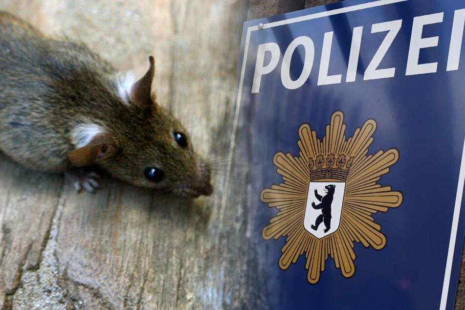 In zwei Polizeigebäuden in der Kruppstraße in Moabit und einem Gebäude in der Wedekindstraße in Friedrichshain wurde Rattenbefall festgestellt. (Bildmontage)