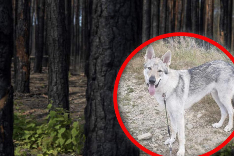 Seltener Hund entführt und im Wald getötet!