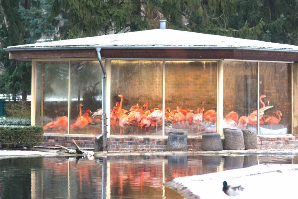 Vogelgrippe-Verdacht im Dresden Zoo.