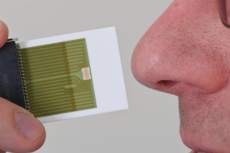 Der Sensor im Vergleich zu einer menschlichen Nase.