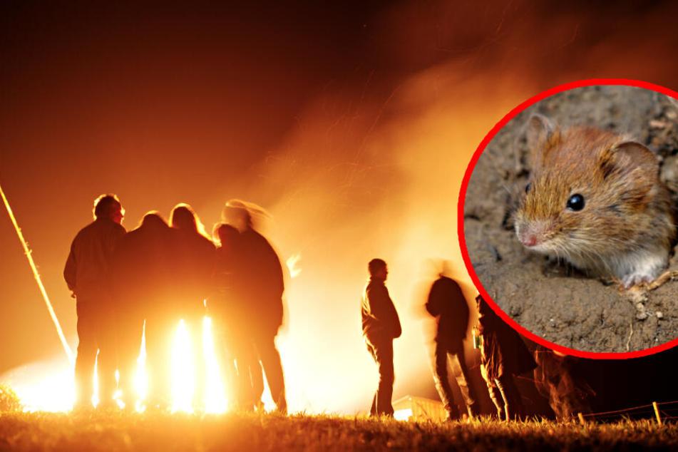 So können kleine Tiere vor dem Osterfeuer geschützt werden