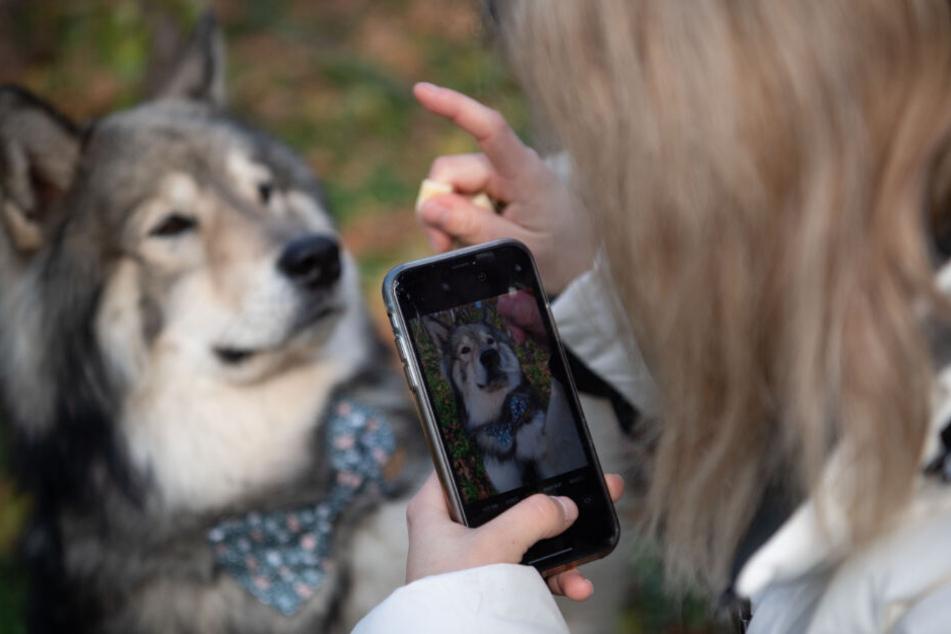 Petfluencer: Wenn das Haustier zum Instagram-Star wird