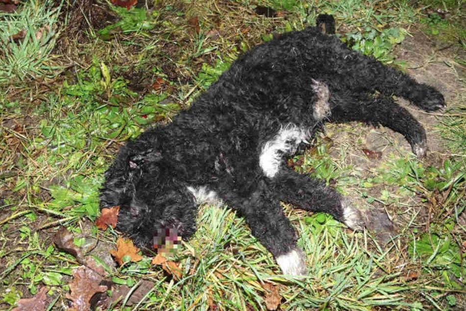 Der kleine Hund wurde so lange verprügelt, bis er reglos liegen blieb.