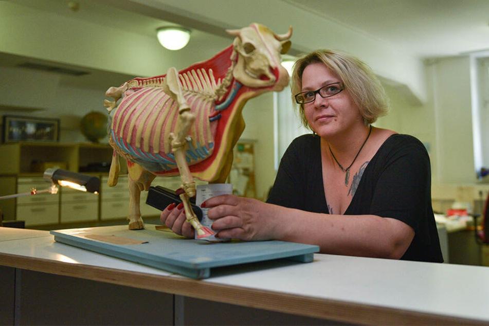 Wer hat hier sein Kuh-Skelett vergessen? Auch solche Skurrilitäten wandern ins Fundbüro.