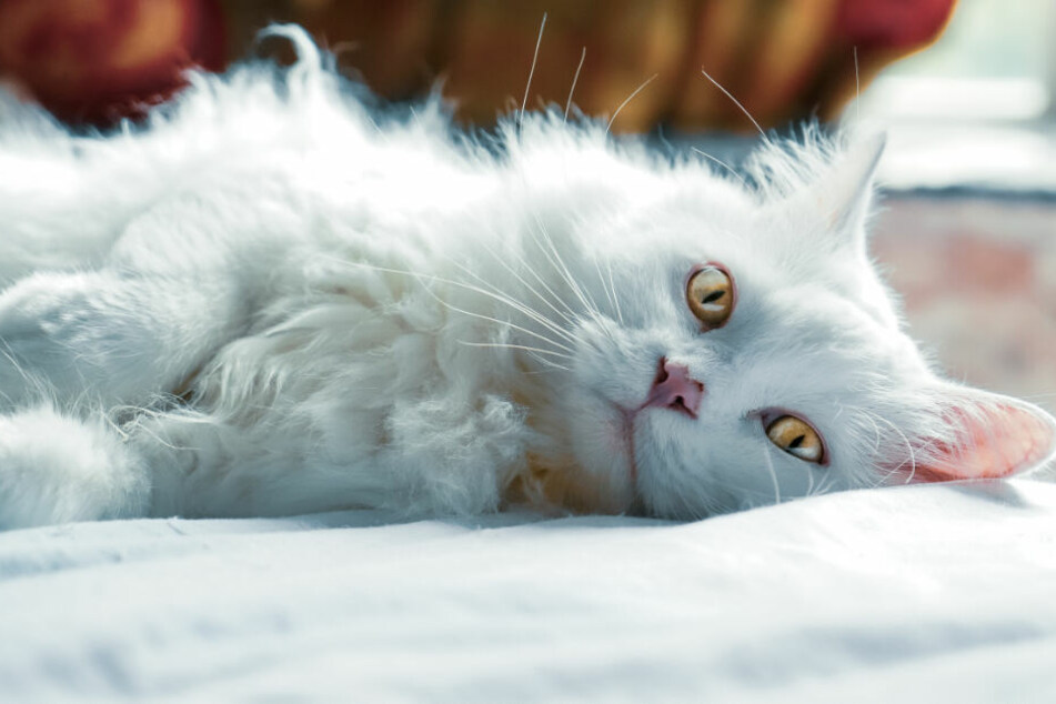Cats need a lot of attention and variety to stay physically and mentally fit.