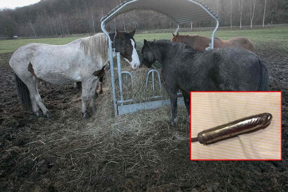 Perverser Tierquäler foltert Pferd mit Sex-Spielzeug zu Tode