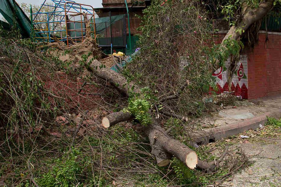 Die Schäden sind unübersehbar: Entwurzelte Bäume behindern den Straßenverkehr.