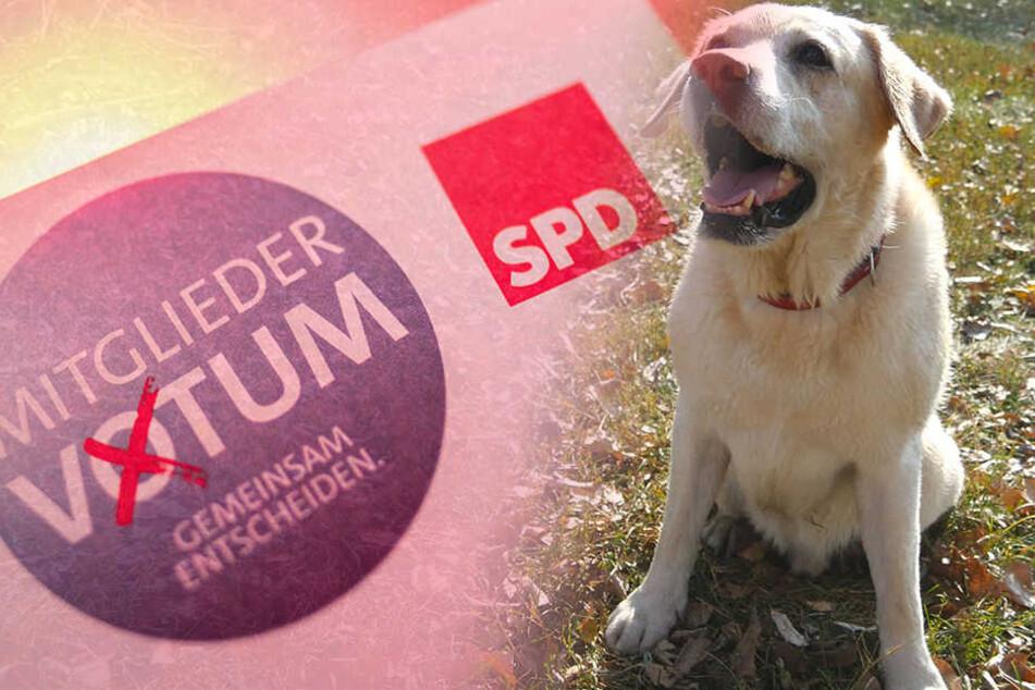 Die Bild-Zeitung ließ eine dreijährige Hündin in die SPD eintreten. (Symbolbild)