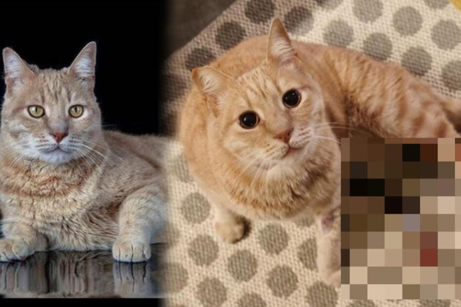 Wie schön: Katze wird angefahren und verliert zwei Beine, dann die Rettung!