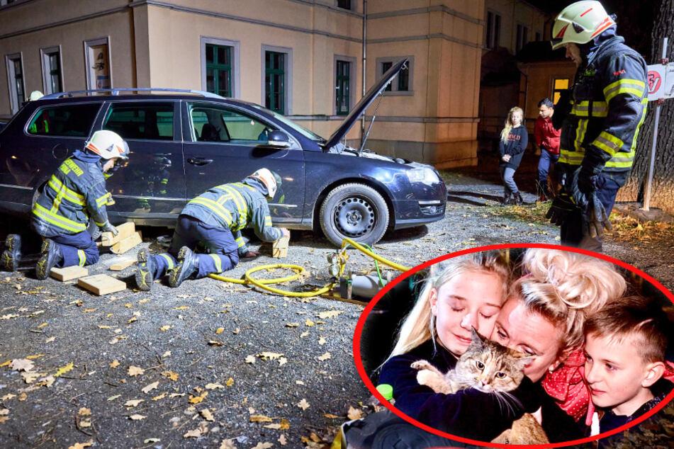 Pirnaer Feuerwehr schraubt Auto auseinander: Kätzchen auf der Flucht im Motor gefangen!