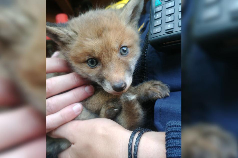 Ein Polizist hält ein gerettetes Fuchsbaby im Arm.