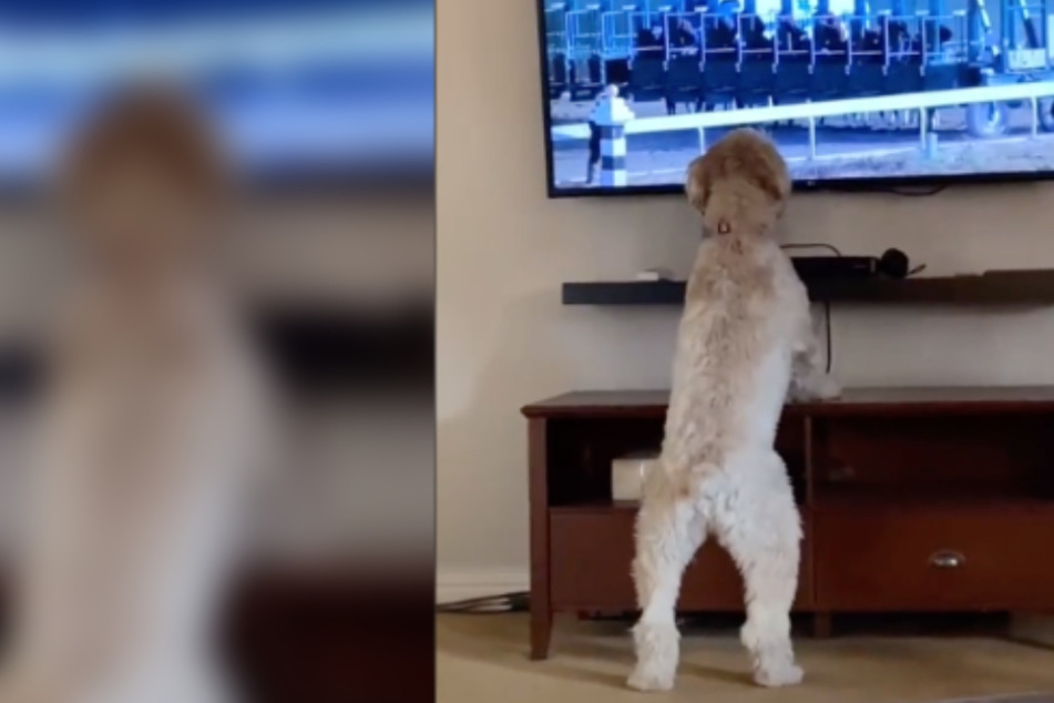 All bets are on this dog winning you over with its incredible enthusiasm for sports!