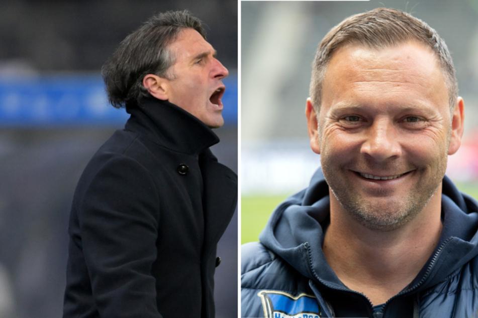 Der alte Hertha-Coach Pal Dardai (r.,44) könnte Bruno Labbadia (54) beerben.