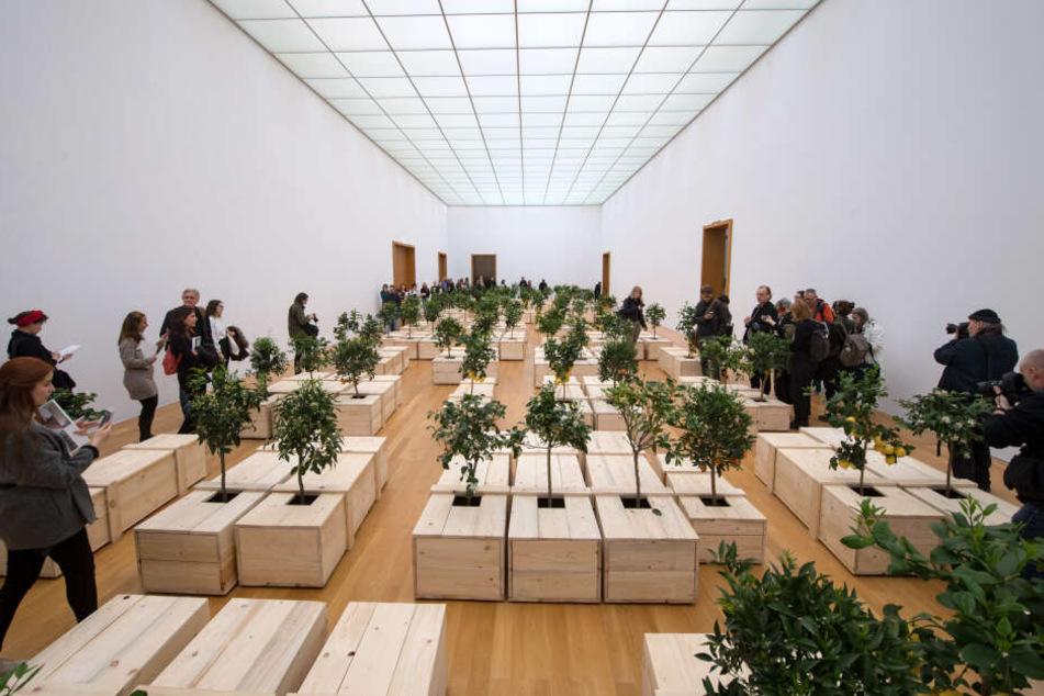 """Yoko Onos Werk """"EX IT"""" besteht aus 100 Särgen, aus denen Zitronenbäume wachsen."""