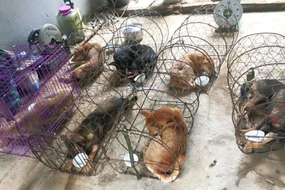 Die Hunde lebten, bevor sie geschlachtet werden sollten, in viel zu engen Käfigen.