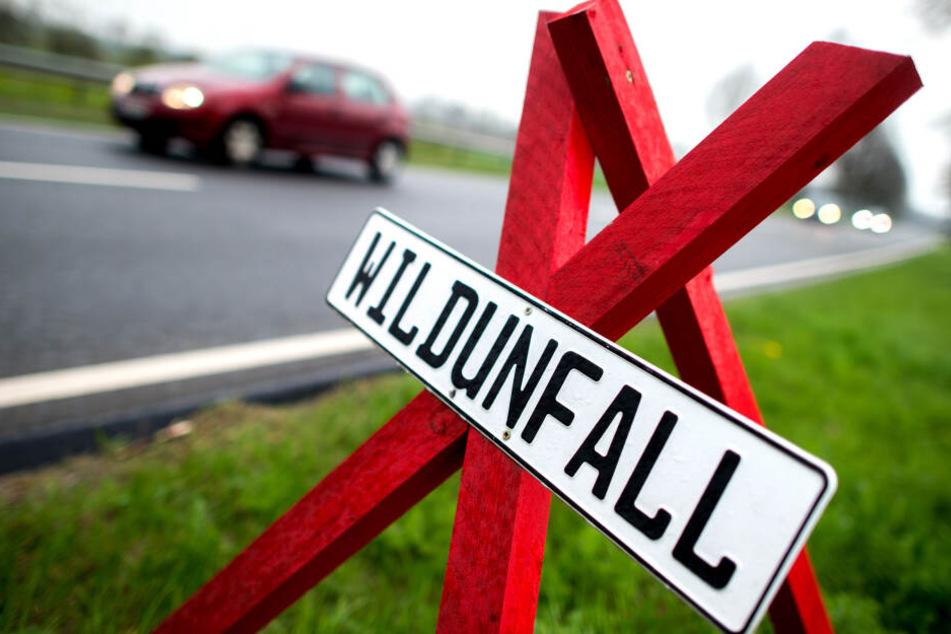 Ein rotes Dreibein mit dem Hinweis auf einen Wildunfall steht am Straßenrand. (Symbolbild)