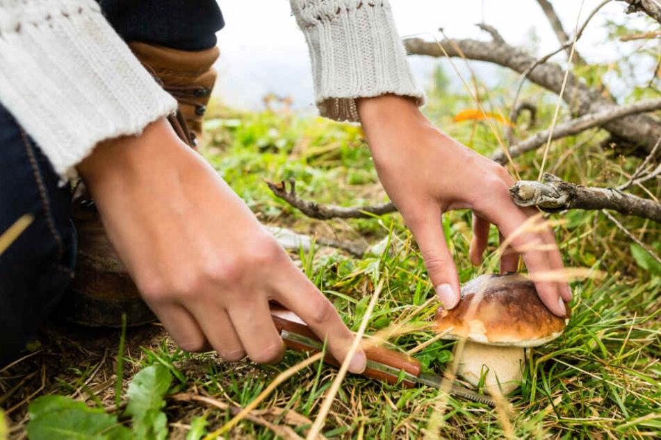 Wer mit kiloweise Pilzen aus dem Wald stapft und erwischt wird, muss mit einem saftigen Bußgeld rechnen.