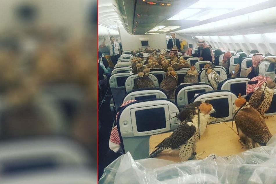Saudi-Prinz lässt 80 Falken im Passagierflugzeug mitfliegen