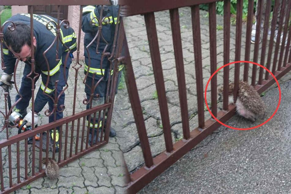 Feuerwehrleute sind entzückt, als sie sehen, wer am Einsatzort ihre Hilfe braucht