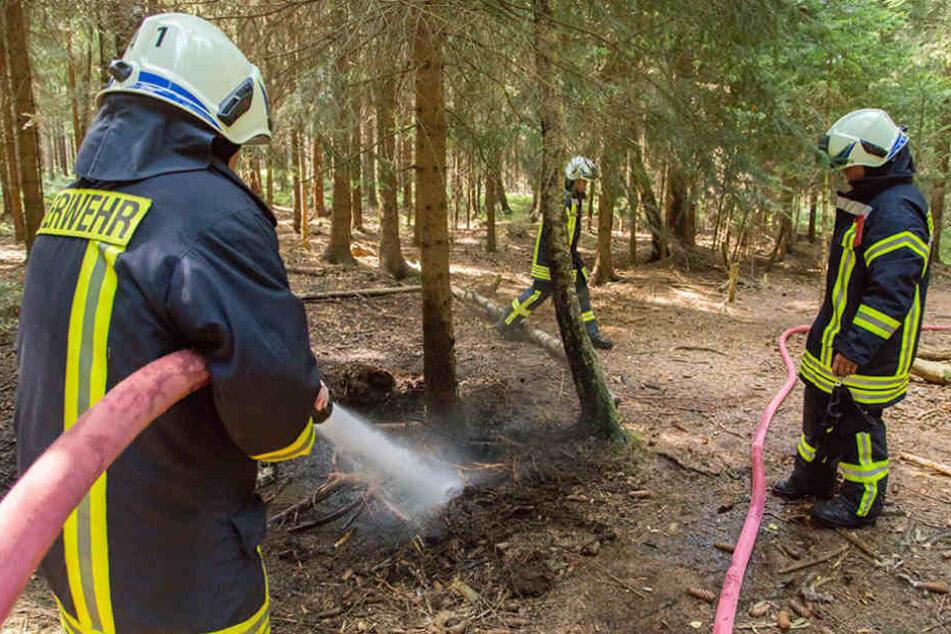 Höchste Waldbrandgefahr in  Sachsen. Die Feuerwehr musste bereits löschen.