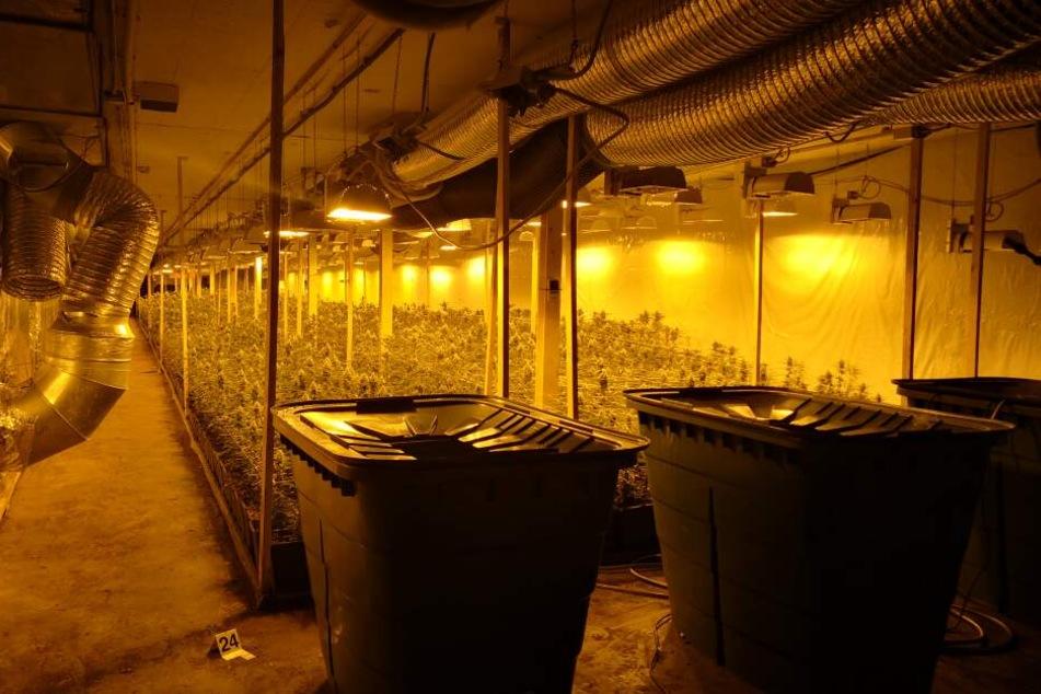 Bunker-Plantage: An professionellem Equipment hat es den Tätern scheinbar nicht gemangelt.