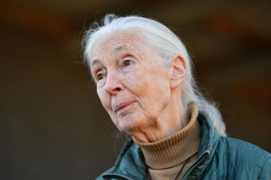 Die britische Verhaltensforscherin Jane Goodall (85) versteht die Menschheit nicht.