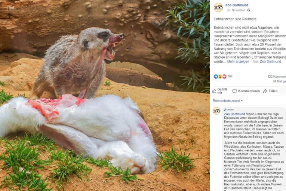 """Hier das """"schaurige"""" Foto des Erdmännchens im Zoo Dortmund."""
